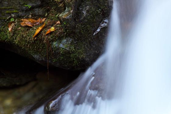 枯れ葉と流水