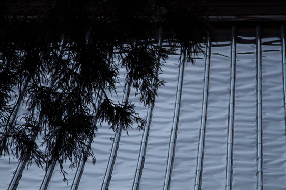 濡れた屋根