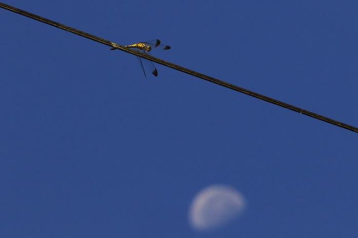 トンボと月