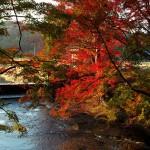養老渓谷もどきのくらもち滝の里で紅葉見てきたった 2