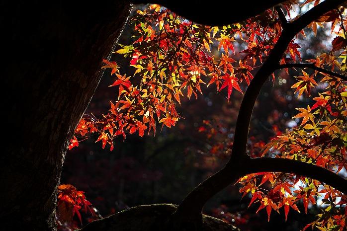 養老渓谷もどきのくらもち滝の里で紅葉見てきたった 1