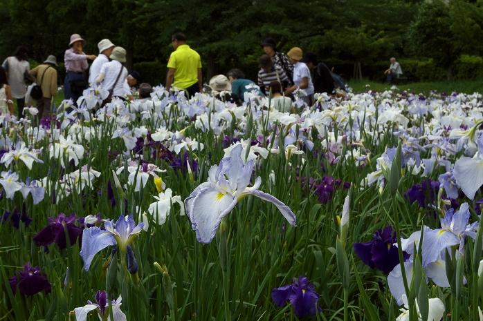 袖ケ浦公園からタイムトンネルを通って富山の散居村を見てきたったwwwww
