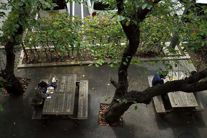 写風~そよかぜさんの写真展を見に、君津中央図書館に行ってきたった。
