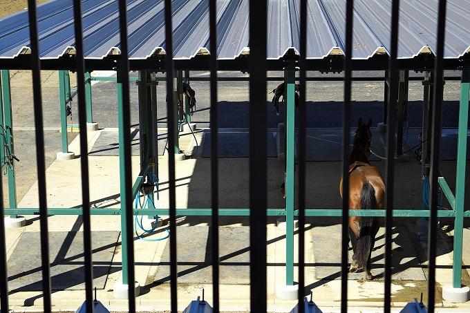 乗馬クラブクレイン千葉富里さんで乗馬体験してきたった。これで貴族の仲間入りなうwww