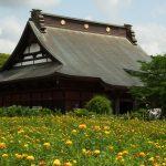 長福寿寺のベニバナと野見金のアジサイと。