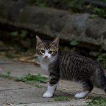 うちに住み着いた野良ネッコが子猫を産んで毎日運動会をやらかすwwwww