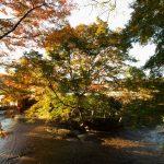 今年の紅葉はちょっとイマイチ、くらもち滝の里