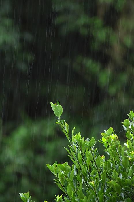 雨の日には写真を撮って・・・