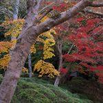 リソル生命の森の紅葉