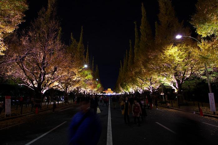 すばらしき神宮外苑のイチョウ並木