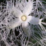 不思議な形の白い花