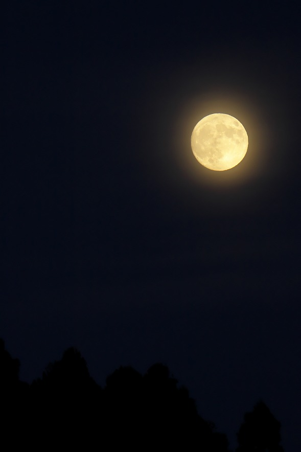Full Moonで血が騒ぐのは悪魔の血のせいか!?