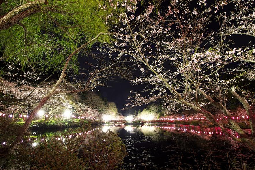 茂原公園の夜桜