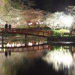 丑三つ時の茂原公園の夜桜