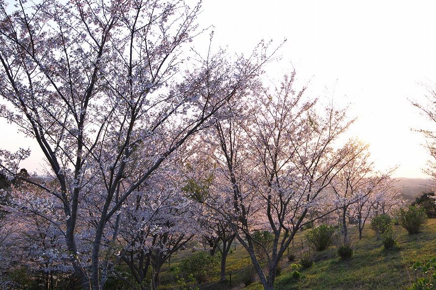 野見金公園 日の出