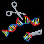 ゲノム編集食品は安全か?