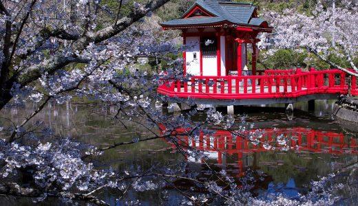 春爛漫の茂原公園