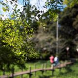 茂原公園をプラプラプラ
